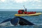 Croisière d'observation des baleines en Zodiac – Baie Sainte-Catherine (2h30)